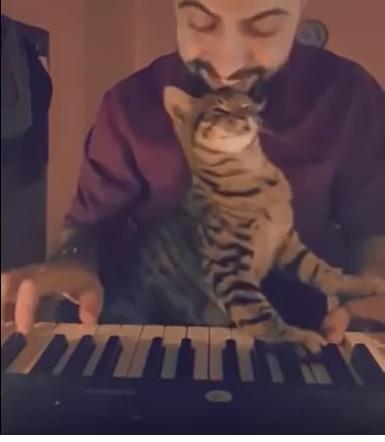 Piano cat.....