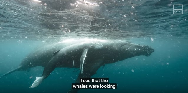 Four very cool videos of whales.....