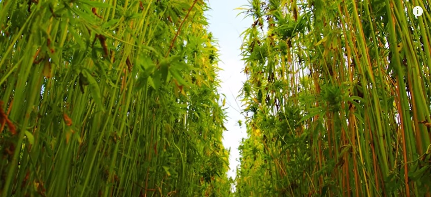 Happy 4-20! The Most Powerful Plant on Earth? The Hemp Conspiracy...