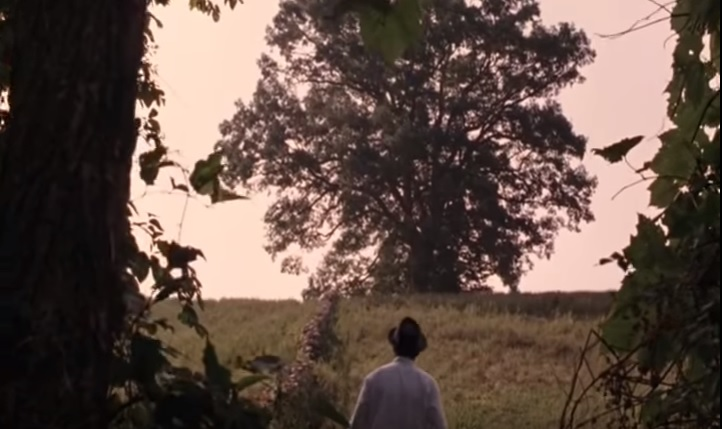 The famous 'Shawshank Redemption' oak tree lives on.