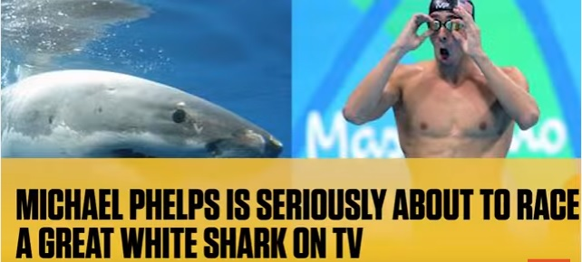Phelps VS. Shark – the race is on!""