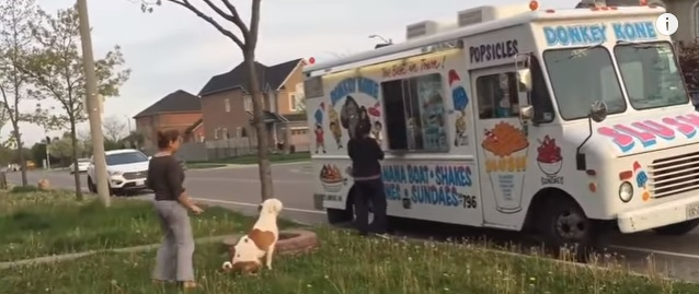 Dogs and the Ice Cream Truck.....