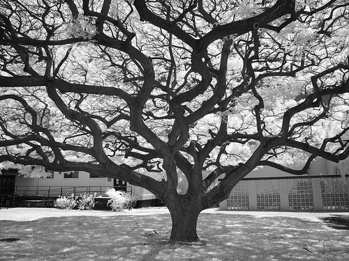 10 trees that refuse to give up