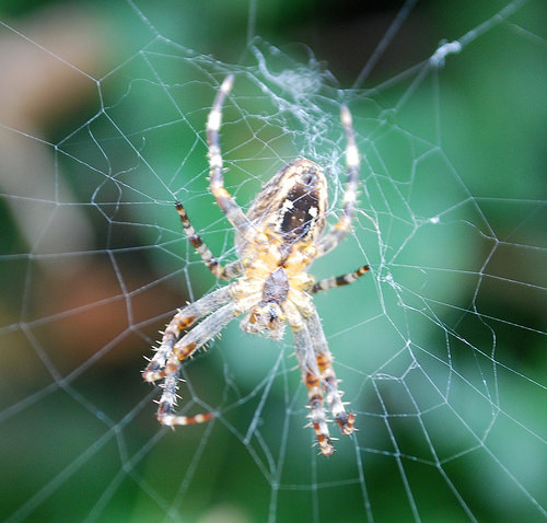 Arachnophobia? Would it help if you knew that spiders have teeny little paws?