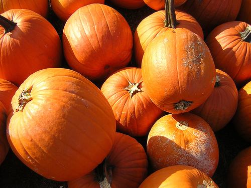 Pumpkin Spice... vodka?