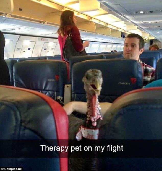 Weird scenes on the airplane. Really weird.