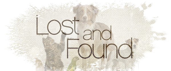 Lost: a female black Newfoundland mix