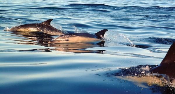 Waterford Senator says attitudes need to change after plastics found in marine animals