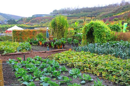 Garden Start-Up – GIY Tramore