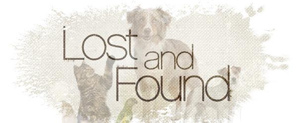 Found: a small Beagle type dog