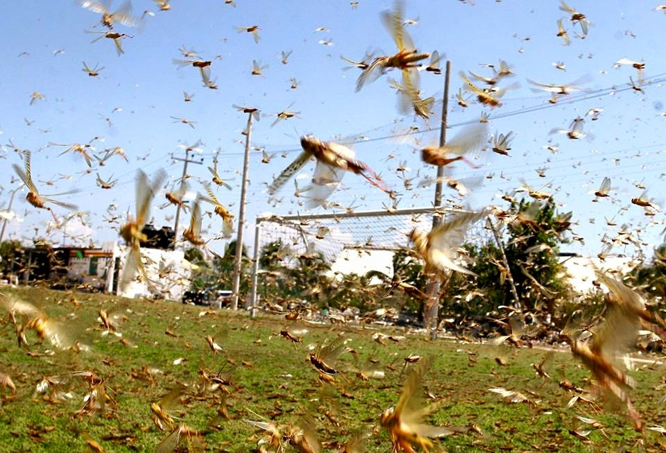 Could a plague of locusts threaten the World Cup? Sean Defoe discusses this and more on Twitter Thursday