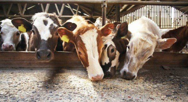 Emergency supplies arrive today as livestock fodder shortage continues
