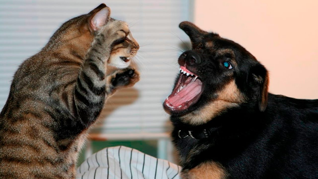 Listen back: Rachael asks the ultimate question on The Big Breakfast Blaa - are you a cat or a dog person?