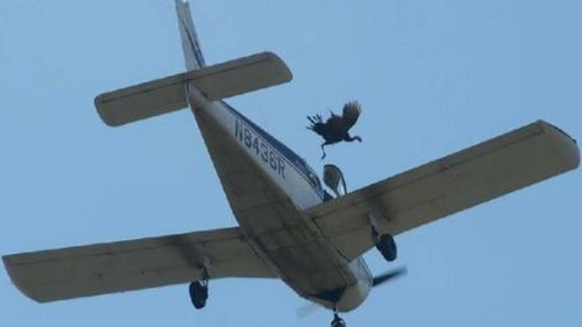 """""""As God as my witness, I thought turkeys could fly"""" [VIDEO]"""