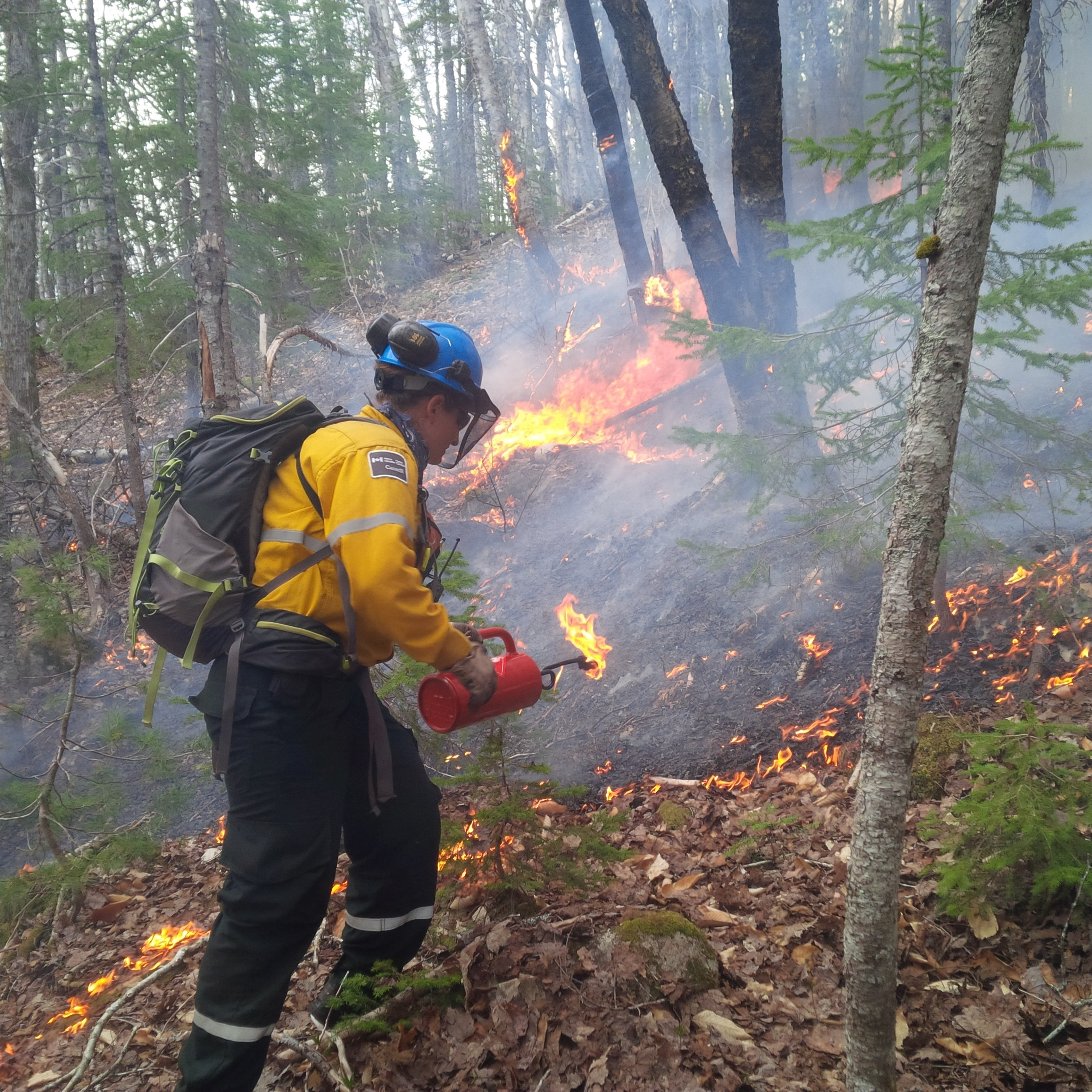 Parks Canada officials plan prescribed fire in Cape Breton Highlands National Park