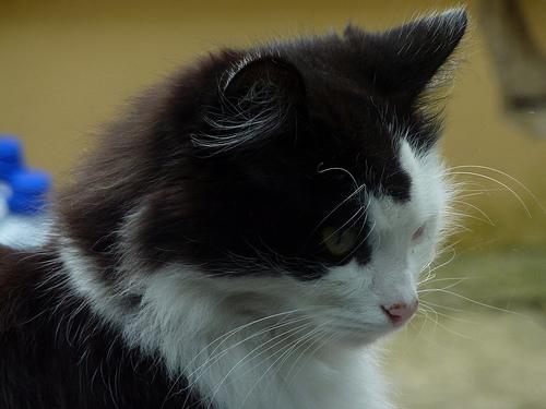 Minnesota Cat Ties Guinness World Record