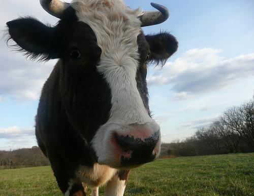 Kansas Farmer uses 'Cow Art' to say 'hi' to SpaceX rocket!