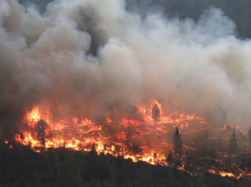 TNRD small businesses took an economic pounding during summer wildfire season
