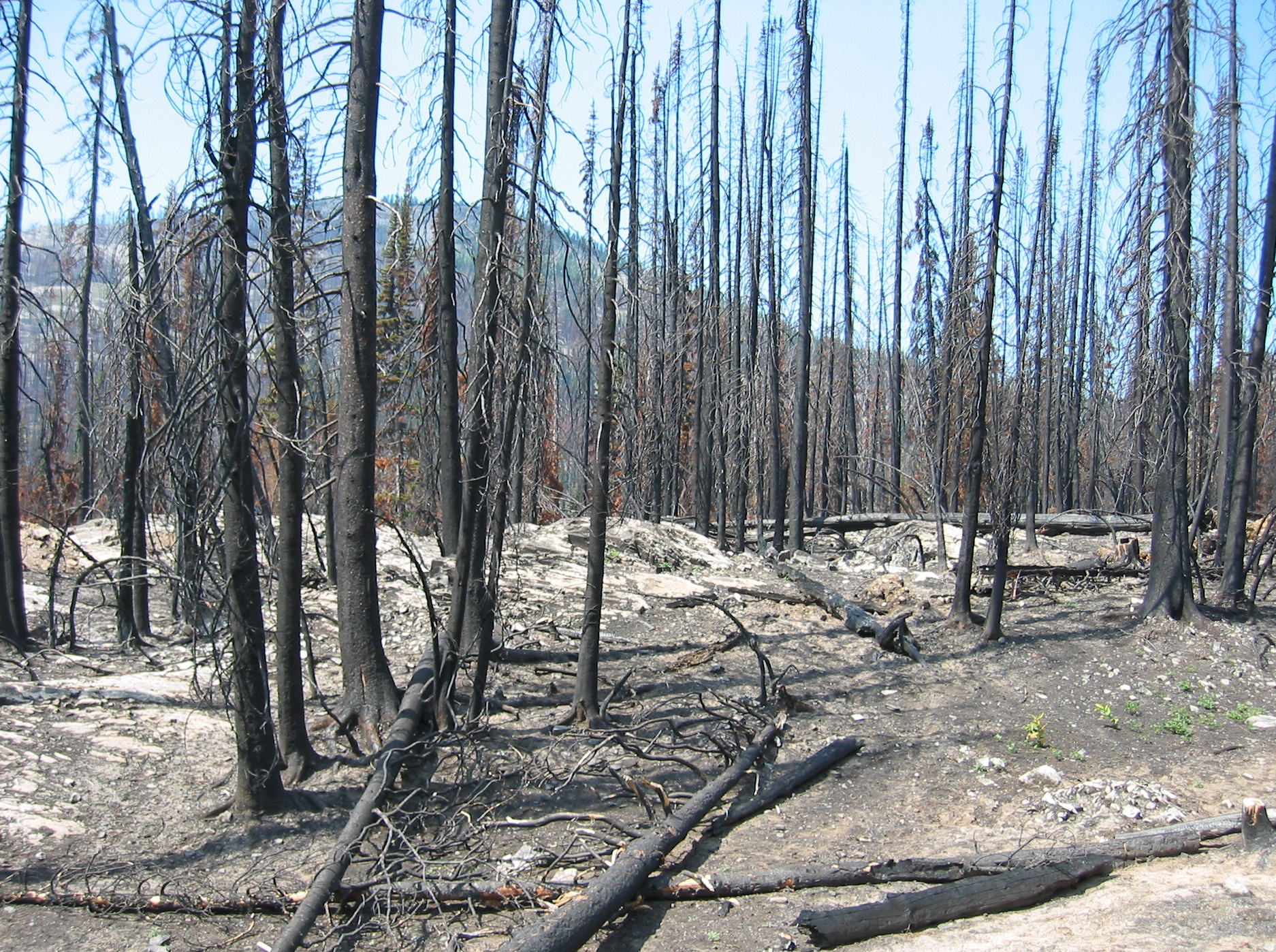 Recent report on residential wildfire recovery in the TNRD found one overriding theme