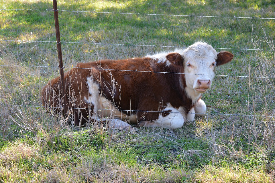 Kamloops area livestock fencing to see improvement efforts continue with provincial program extension