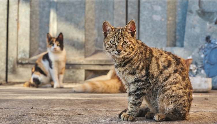 Number of feral cats declines in Kamloops