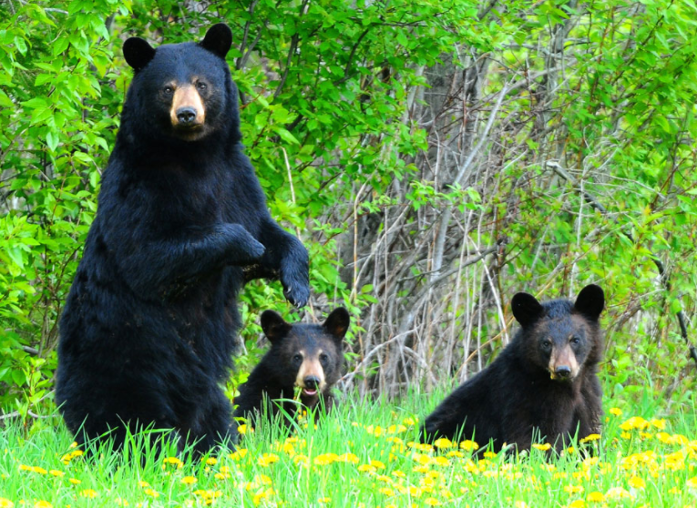 B.C Conservation Service monitoring a so far, bear-minimal spring in Kamloops