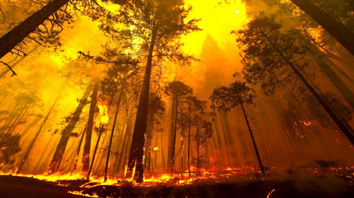 100 Mile House Mayor says communication must be improved to tackle future wildfires