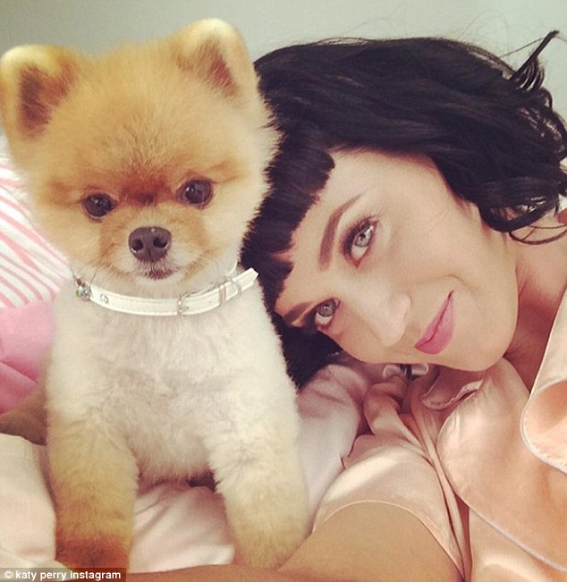 The Dog from the Katy Perry Video is Cute Cute Cute!!