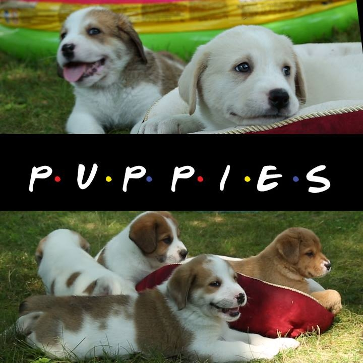 """the """"Friends"""" as Puppies..."""