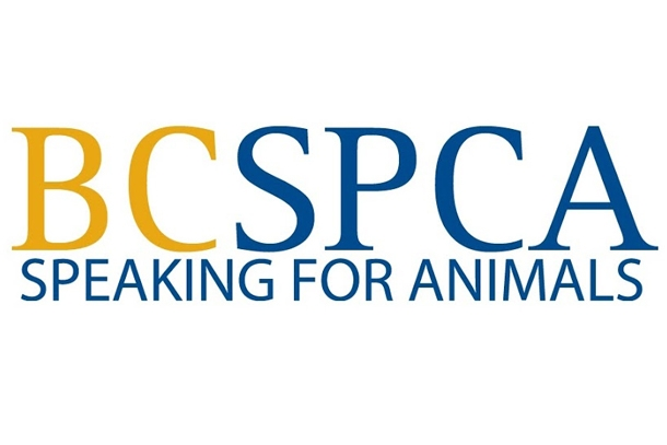 National Cup Cake Day for the SPCA