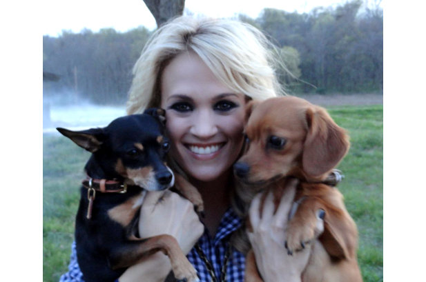 1924669-carrie-underwood-dogs-pets-617-409