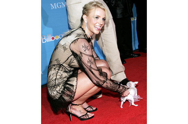 1932339-britney-spears-dog-617-409