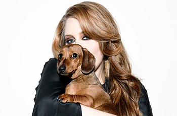 adele-dog-louie
