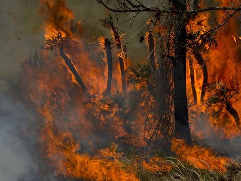 The Number of Wildfires is Ahead of the Five-Year Average