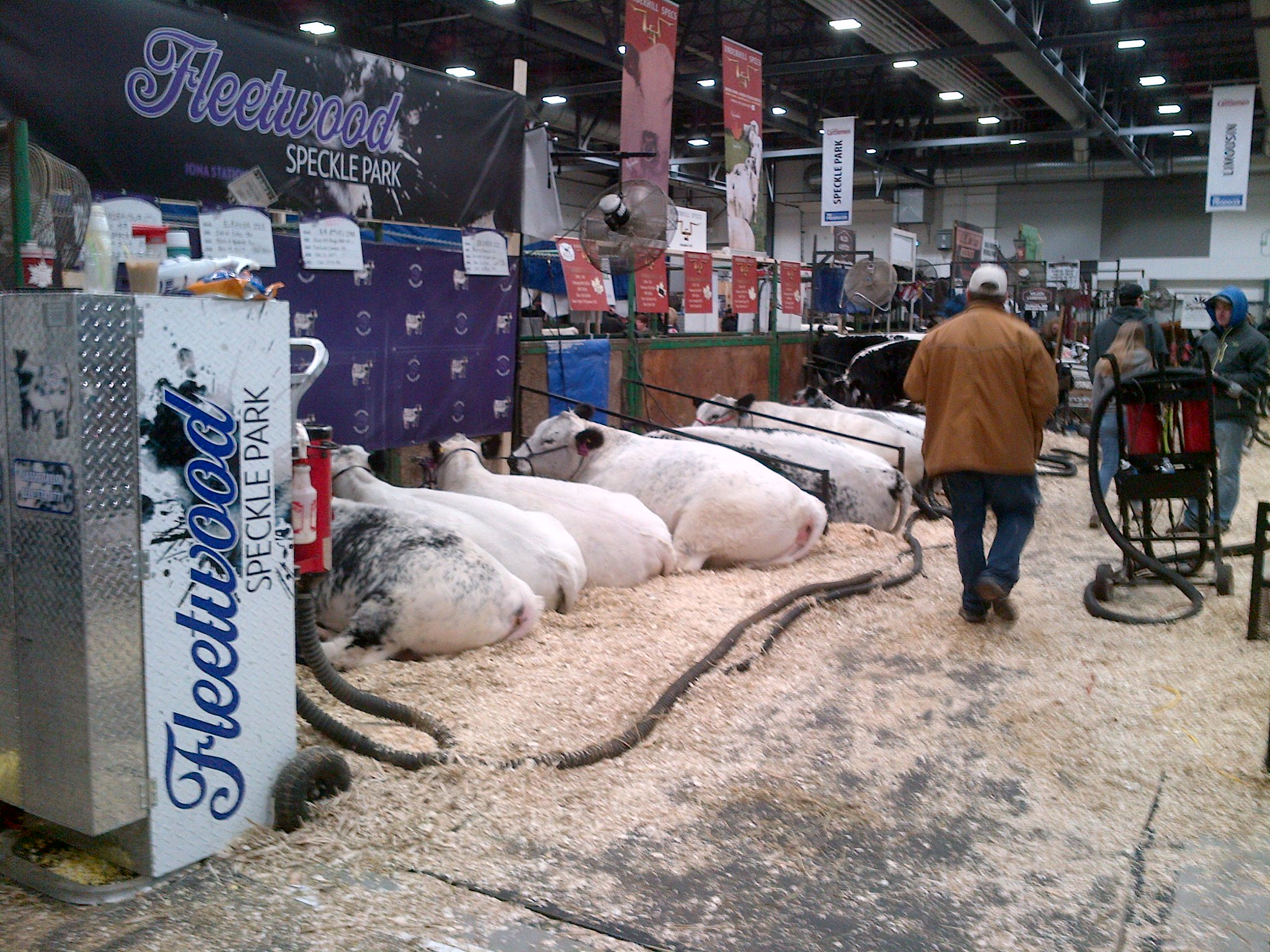 Profitable Year for Canadian Western Agribition