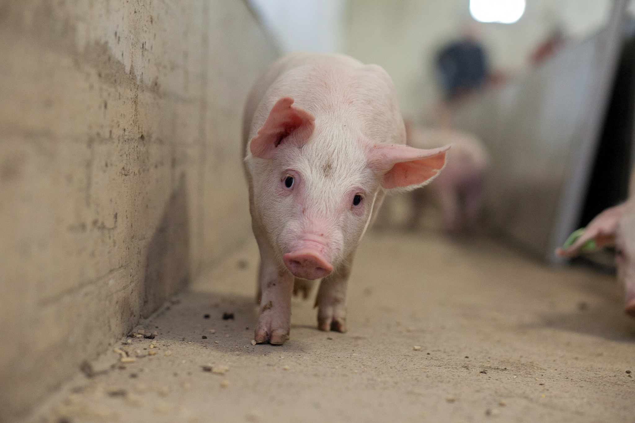New High Tech Tools For Water and Swine Research at U of S