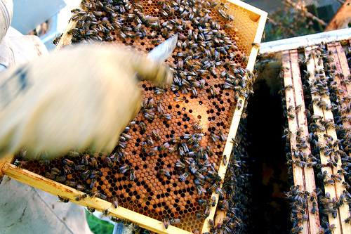 Tough Winter for Bees