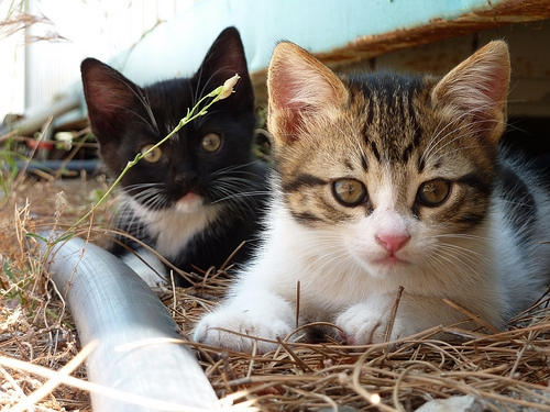 Police investigating after 17 kittens abandoned