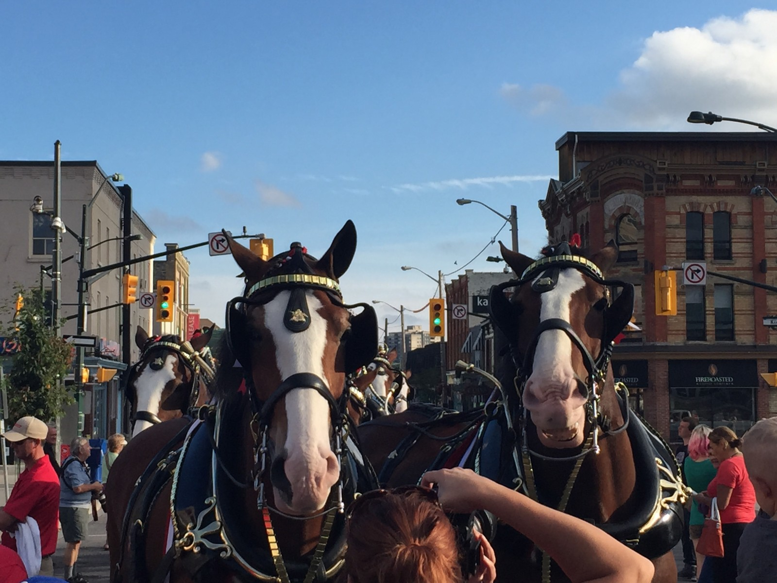 The Budweiser Clydesdale's make an appearance in London