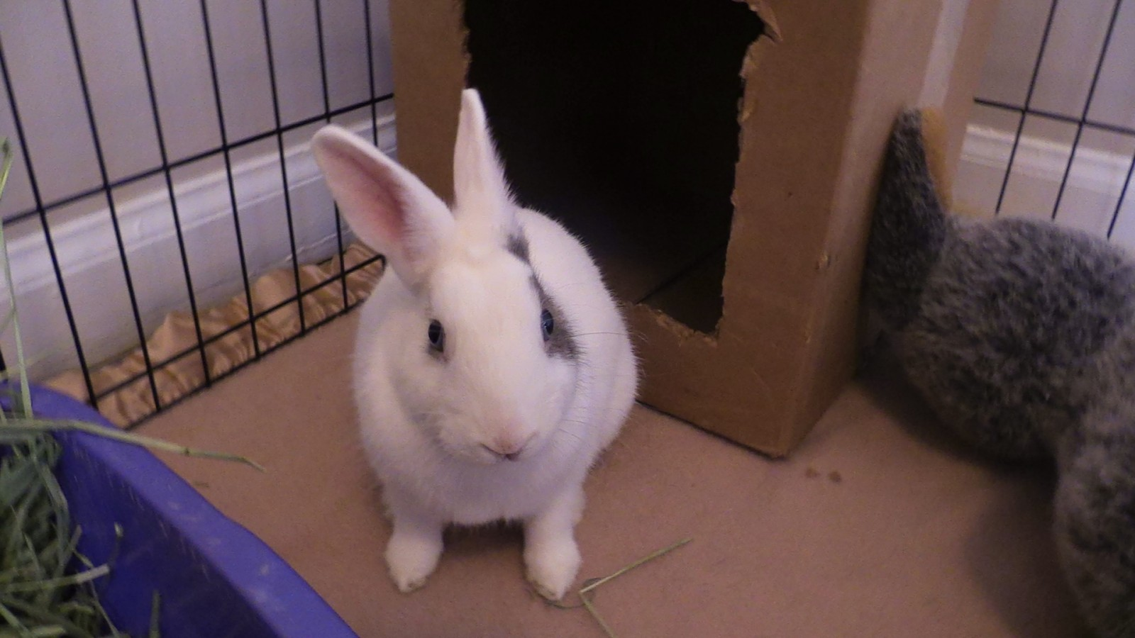 Rabbit rescue looks to educate the public about Easter bunnies