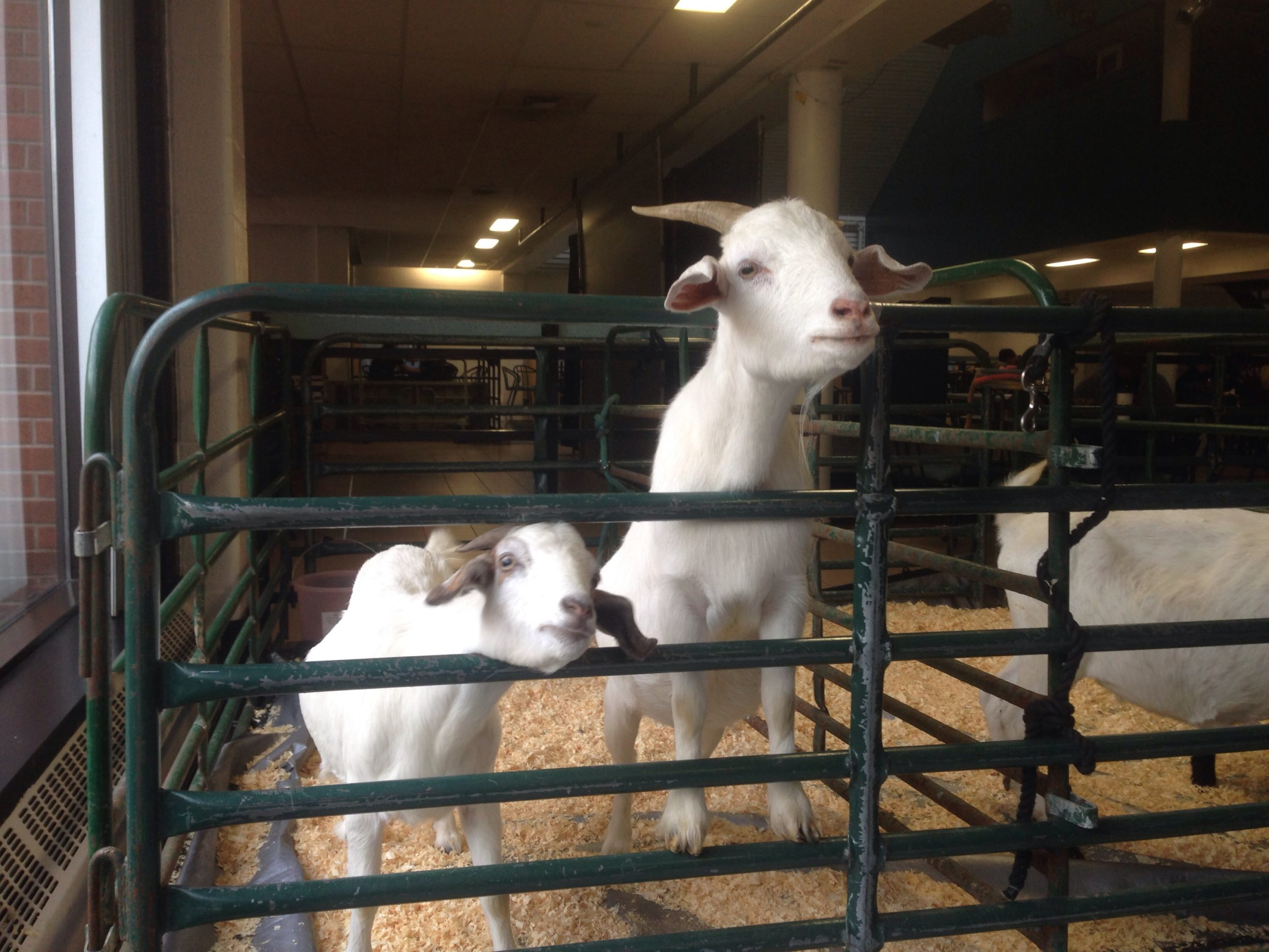 Fanshawe College kicks off mental health week as students join the petting zoo event at Forwell Hall