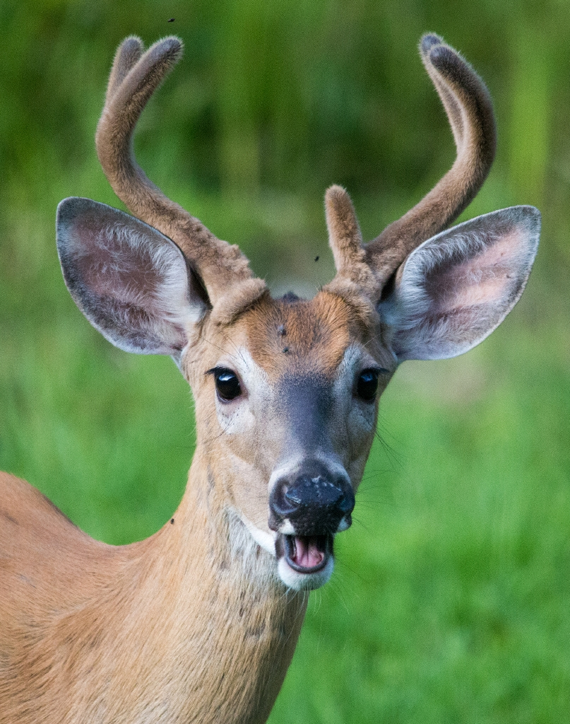 Oh deer...literally.