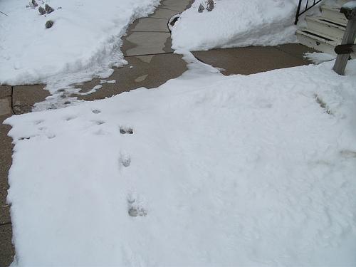 Illinois Supreme Court Clarifies Snow-Shoveling Rules