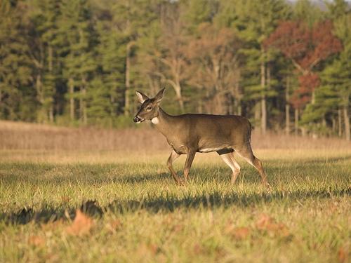 Illinois Deer Harvest Down