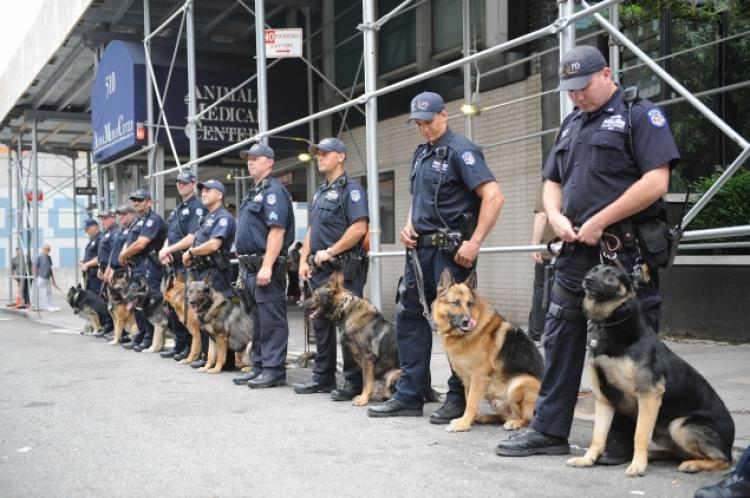 New Law Allows Ambulances To Rush Police Dogs To Treatment