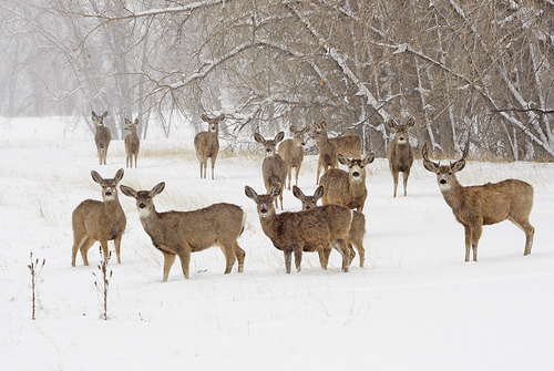 IllinoisDNR Pushes Need For Hunter Harness Safety