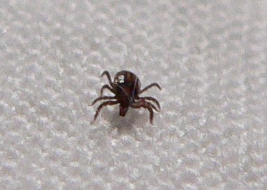 Illinois Warns of Increase In Tick Diseases