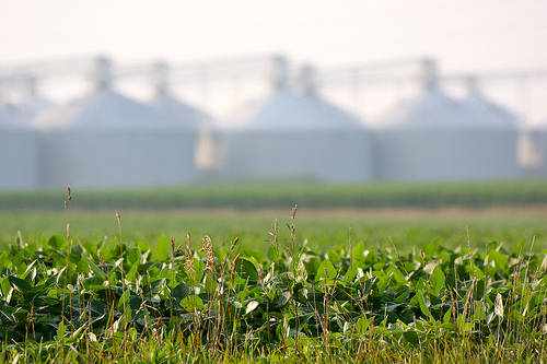 Illinois Farmers Ahead Of Spring Planting Pace