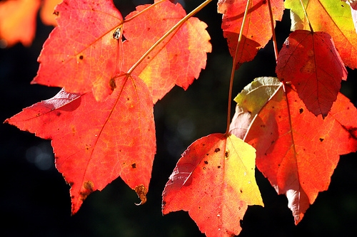 Leaf Collection in Mattoon to Continue Through December