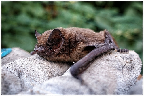 Illinois Woman Attacked By Bat